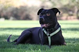 camino de santiago perro dog chien