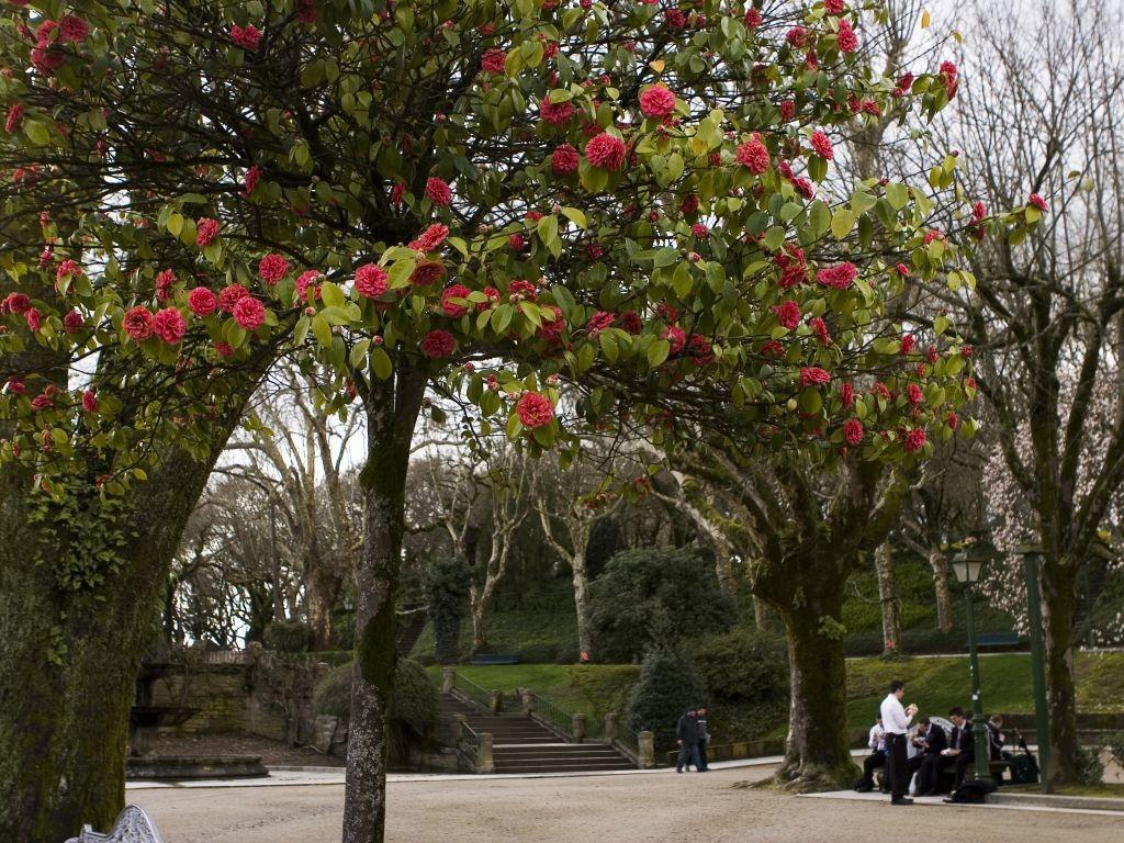 parque-alameda-en-santiago-compostela
